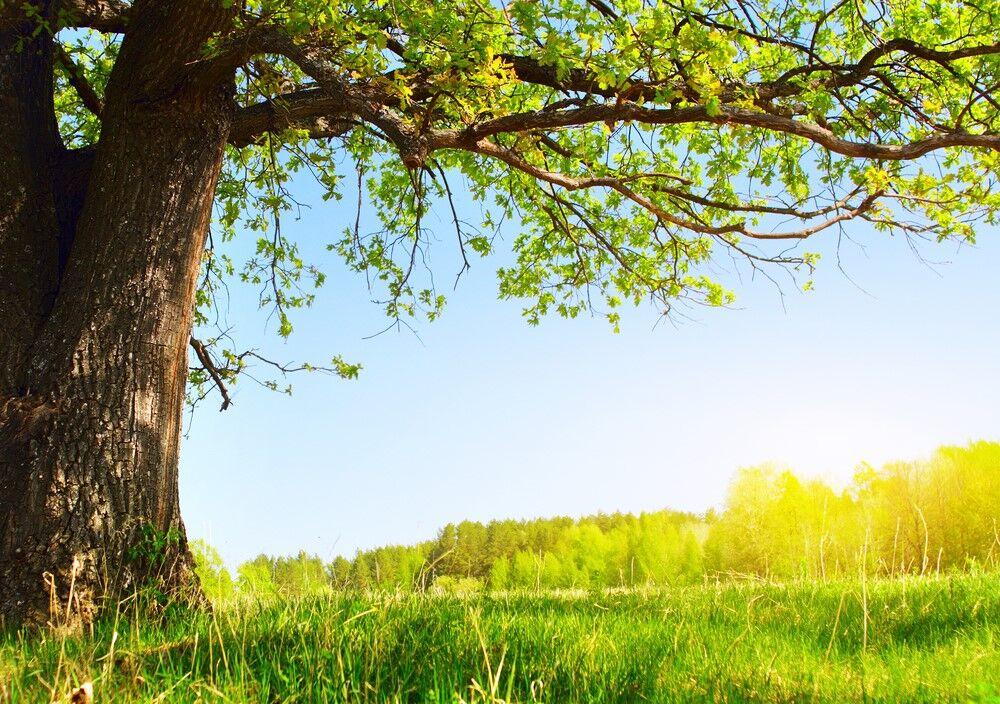 doğa yeşili