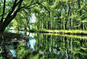 Doğa Severlerin Kesinlikle Görmesi Gereken 10 Muhteşem Orman Manzarası