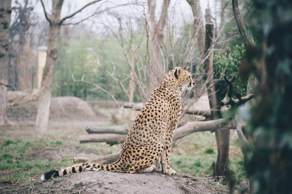 zoo-vienna